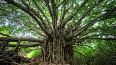 Photo of Crise économique mondiale : pour Thomas Piketty, le Covid-19 est l'arbre qui cache la forêt
